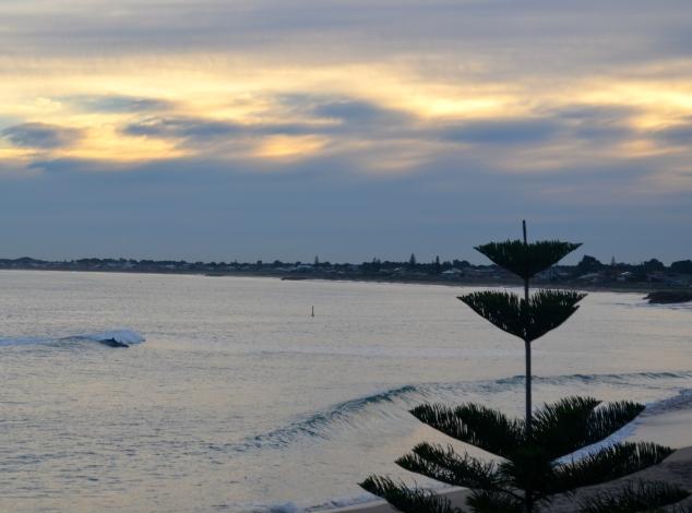 Dolphins surfing on Mandurah's coast.